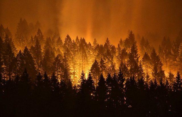 オレゴン州イーグルクリークの山火事は八王子の面積が焼失!花火を投げ込んだ犯人に賠償金40億円の判決。被告の名前や素性は?10年で免除される?