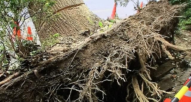 台風24号のような台風で街路樹が倒木する3つの原因とは!?自宅の樹木が倒木したり看板が落下して被害を出したら賠償責任はある?